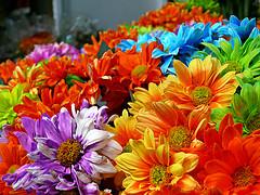 Russia_Flowers.jpg